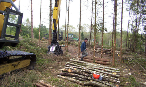 Timber Harvesting and Marketing